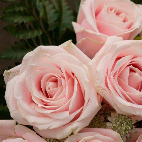 imagenes de flores o rosas significado del color de las rosas blog bourguignon