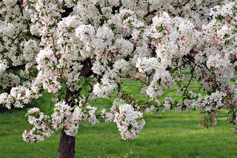 fruit trees that grow in clay soil top 10 plants for clay soil the garden