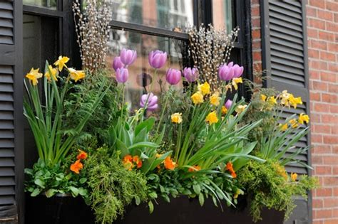 window box flower ideas planting window boxes flowers tips and some great ideas