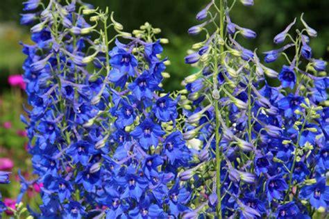 Help Gardening Forum Gardenersworld Com Common Garden Flowers Pictures And Names