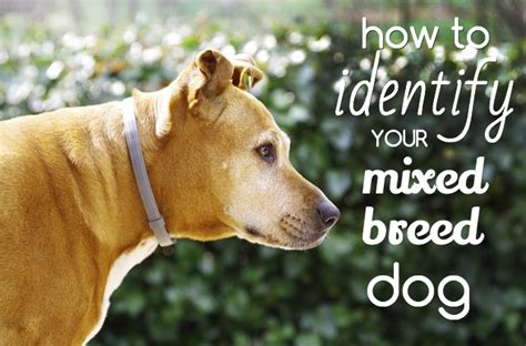 can you breed and dogs breed identification by picture dogs breed sierramichelsslettvet