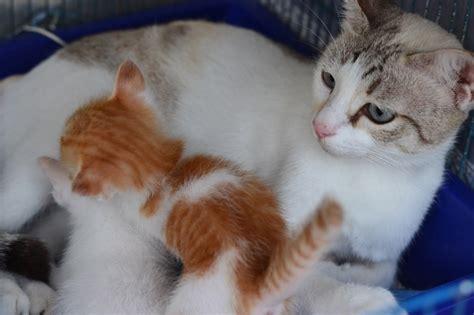 Sho Rainbow So Kucing Sho Kucing Dan Baby Cat Kittens 250ml the plight of being born a stray s story 171 animalcare