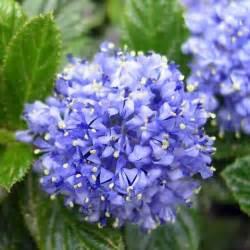 Fleurs Qui Resistent Au Vent by Les 25 Meilleures Id 233 Es De La Cat 233 Gorie Arbuste Fleurs