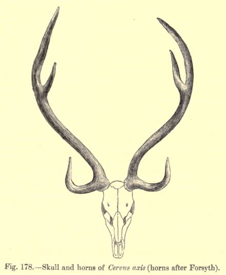 axis tattoo bull skull designs and meanings tatring