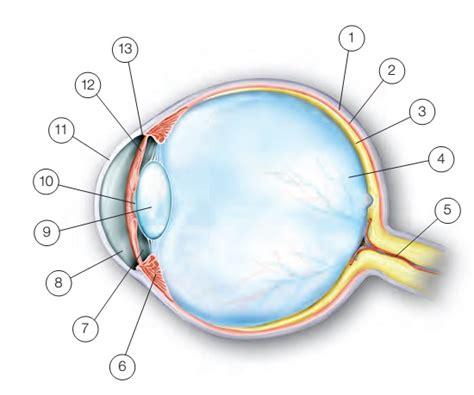 Beschriftung Des Auges by Wissenswertes 252 Ber Wissenswertes 252 Ber Das Auge Plum
