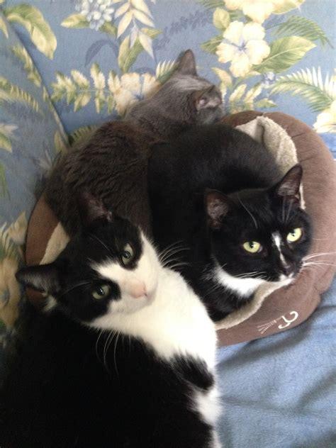 treating cat s chronic diarrhea and inflammatory bowel