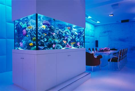 modern aquarium 25 rooms with stunning aquariums decoholic