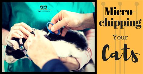 microchip side effects cat veteran everything i need to i learned from my cat