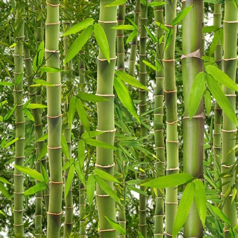 Forest Home Decor by Muriva Rainforest Green Bamboo Trees Leaves Vinyl