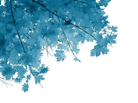 wallpaper blue leaves blue autumn leaves fall picture and wallpaper blank