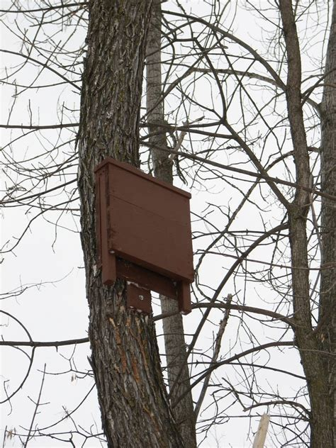 bat house installation bat specialist of michigan