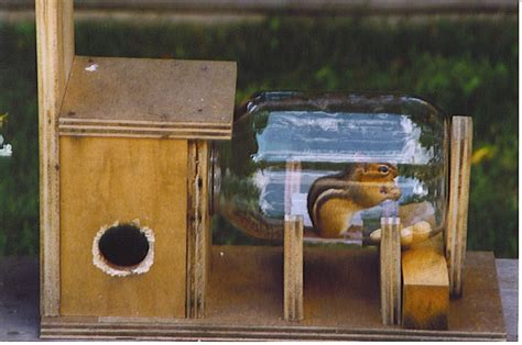 chipmunk feeder from karls woodworking fur babies