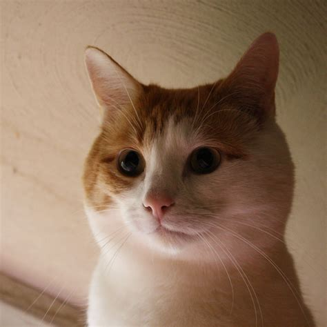 10 ways to use orange and white in your home s decor orange and white cat face close up picture free