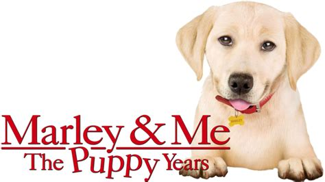 marley and me the puppy years marley me the puppy years fanart fanart tv
