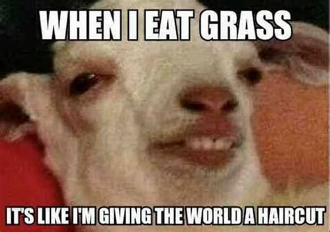 Funny Meme Ideas - 35 most funny goat meme pictures and images