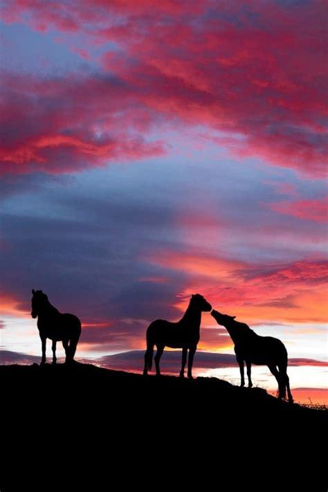 imagenes vaqueras en sombra 50 mejores im 225 genes de cowgirl en pinterest caballos