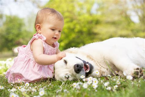 dogs that are with children what are the benefits of and dogs growing up together pets grooming prices