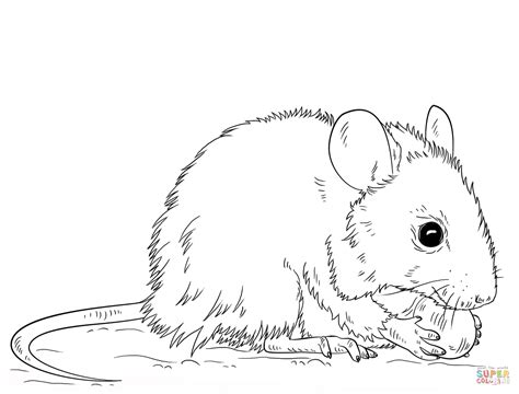 Coloring Page Mouse by Mouse Coloring Page Free Printable Coloring Pages