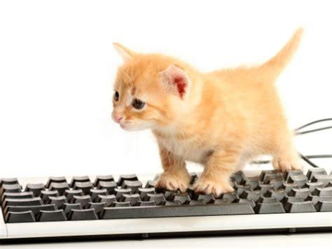 Bild   Baby Katze Tastatur Internetphaenomen   Warrior