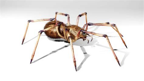 3d Spider 2 By Chronokidlinck On Deviantart 3d Spider