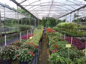 panoramio photo of la vega plant nursery