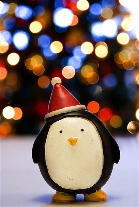 christmas lights party penguin xmas image 59899 on