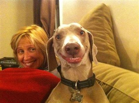 When animals go crazy: 20 Pictures with funny snoots!   Seenox
