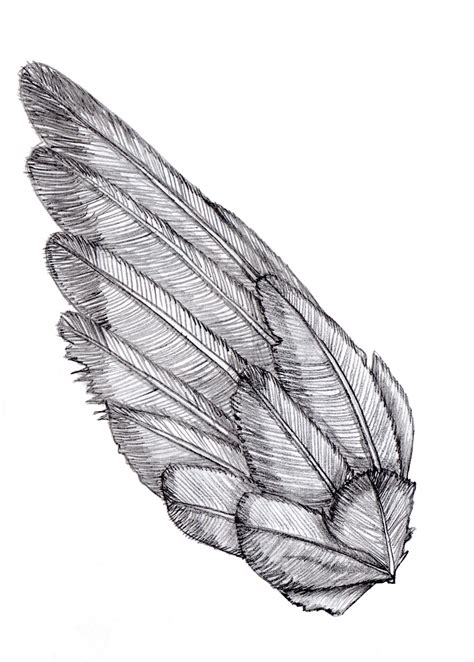 Drawing Wings by Wing Sketch Shoulder Bird And