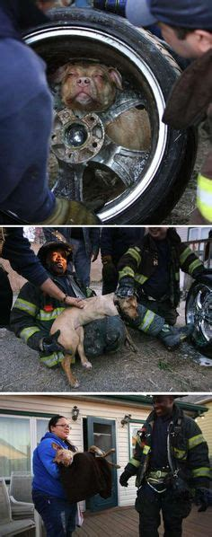 free pitbull puppies nj firefighters rescuing animals on firefighters rescue dogs and