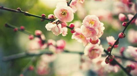 flower bloom bright branch plant hd wallpaper 1920 x 1080 wallpaper 1920x1080 bloom branch flowers
