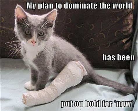 Broken Leg Meme - 12 best injury memes images on pinterest broken foot i