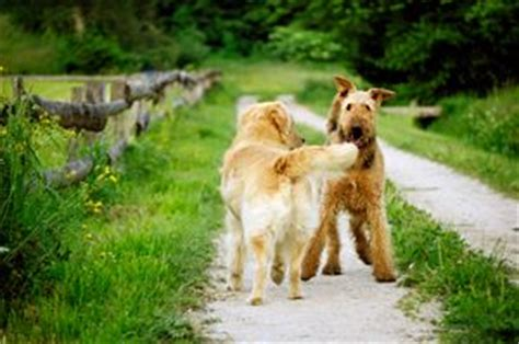 how to introduce two dogs best 20 puppies ideas on