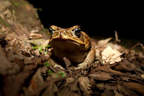 are toads poisonous to dogs 13 things you never suspected could poison your pet