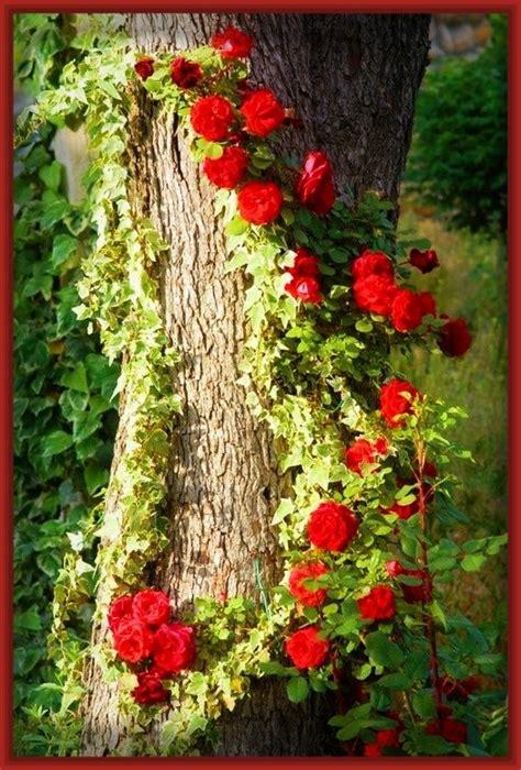 imagenes de rosa y mas im 225 genes de las rosas m 225 s lindas del mundo archivos