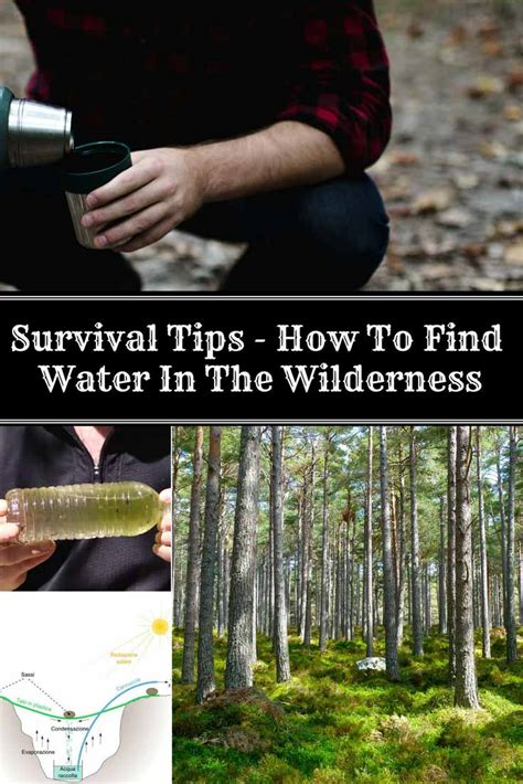 survival tips how to find water in the wilderness home