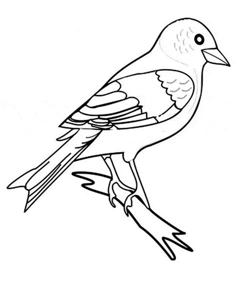 zebra finch coloring page zebra finch coloring page animals town animals color