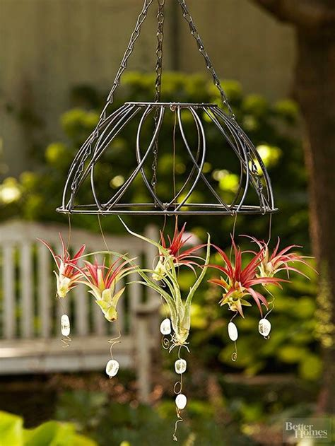 hanging air plant best 25 hanging air plants ideas on air