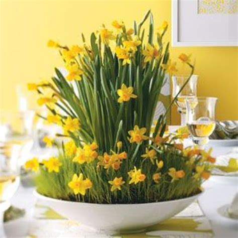 Ideas For Daffodil Varieties Design 32 Cool Daffodils D 233 Cor Ideas To Welcome Digsdigs