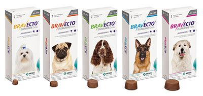 Bravecto Flea Pill For Cats - bravecto flea and tick pill for dogs 15 when you