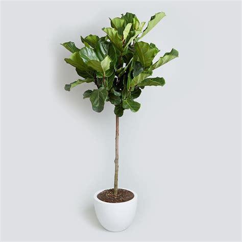 piante da appartamento con fiore regalare piante piante da interno regalare piante
