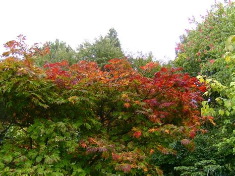 Japanischer Garten Bilder 2612 by Foto Bunte Straeucher Baeume Outdoor Bilder