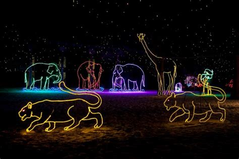 denver zoo lights tickets denver zoo s zoo lights shines bright mile high mamas