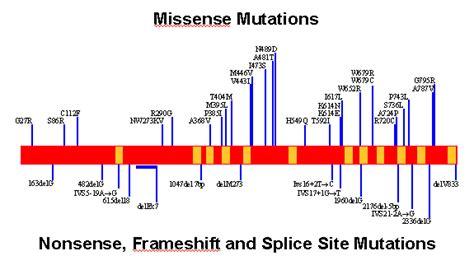 p protein oca2 map of p gene mutations associated with oca2