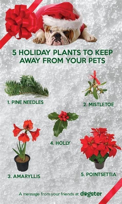 keeping your dog away from your tree 75 best happy holidays for animals images on happy holidays pet safe and your pet