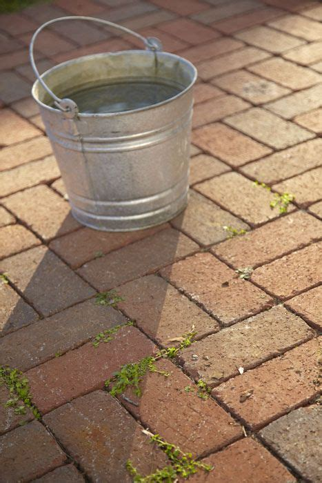 how to clean your brick patio landscaping gardening tips