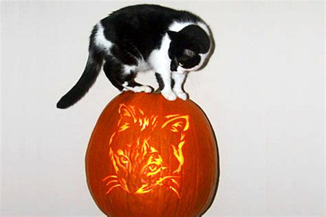 jack o lantern templates cat pumpkin carving patterns ideas pictures april 2013