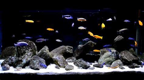 How To Make An Aquascape Malawi Cichlids Biotope 321l Youtube