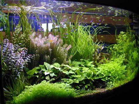 planted aquarium aquascaping 17 best aquarium ideas on pinterest aquarium fish tank