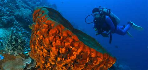Bali Diving Package bali dive course prices bali diving packages