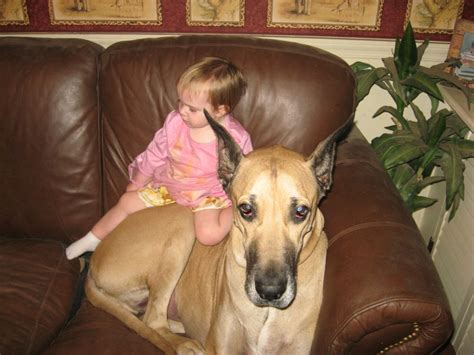 best dogs for families 10 best family dogs for